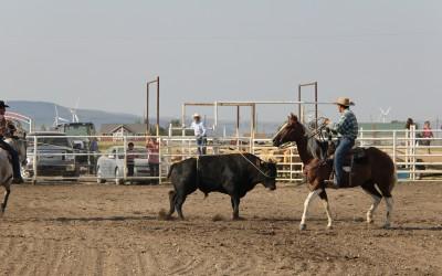 Roping a Bull